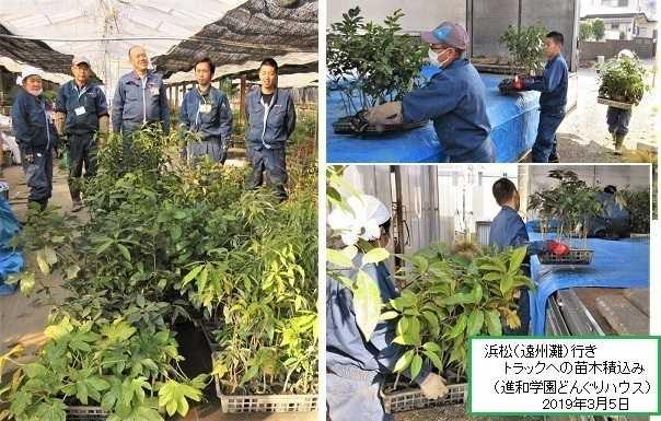 浜松「~KALAプロジェクト」防潮森づくり植樹祭(遠州灘)に苗木提供!