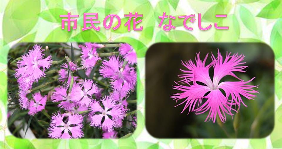 「第46回平塚市緑化まつり」に参加します! なでしこも配布します!!