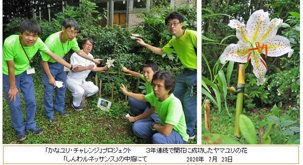 「津久井やまゆり園」事件から4年 ~ ヤマユリの花に追悼の念を込めて! ~