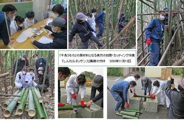 千鳥うちわ用真竹の採取 ~「伝福連携」の貴重な体験 ~