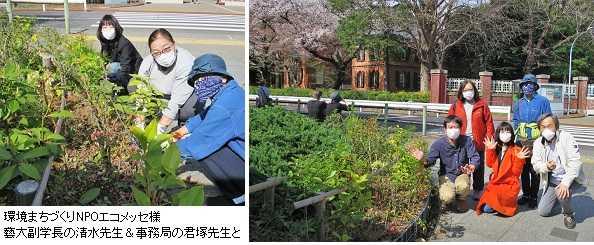 藝大ヘッジ/Geidai Hedgeに苗木提供!